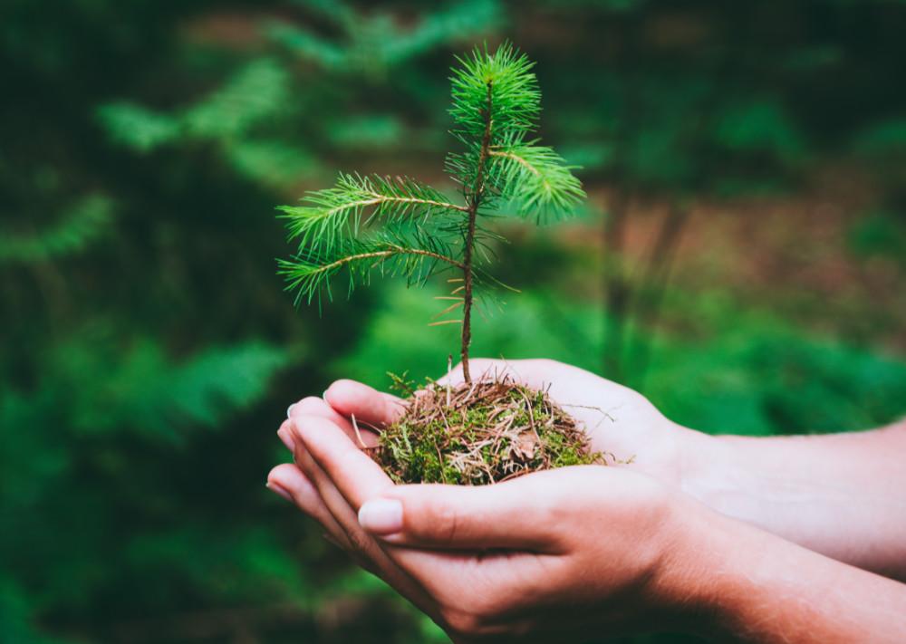 Consultor-sustentabilidad-sustentable